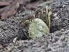 Land Crab_01