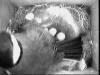 Nest Cam 3