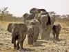 Elephants Group / Namibia