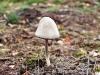 Fungi, Wolverton, Norfolk