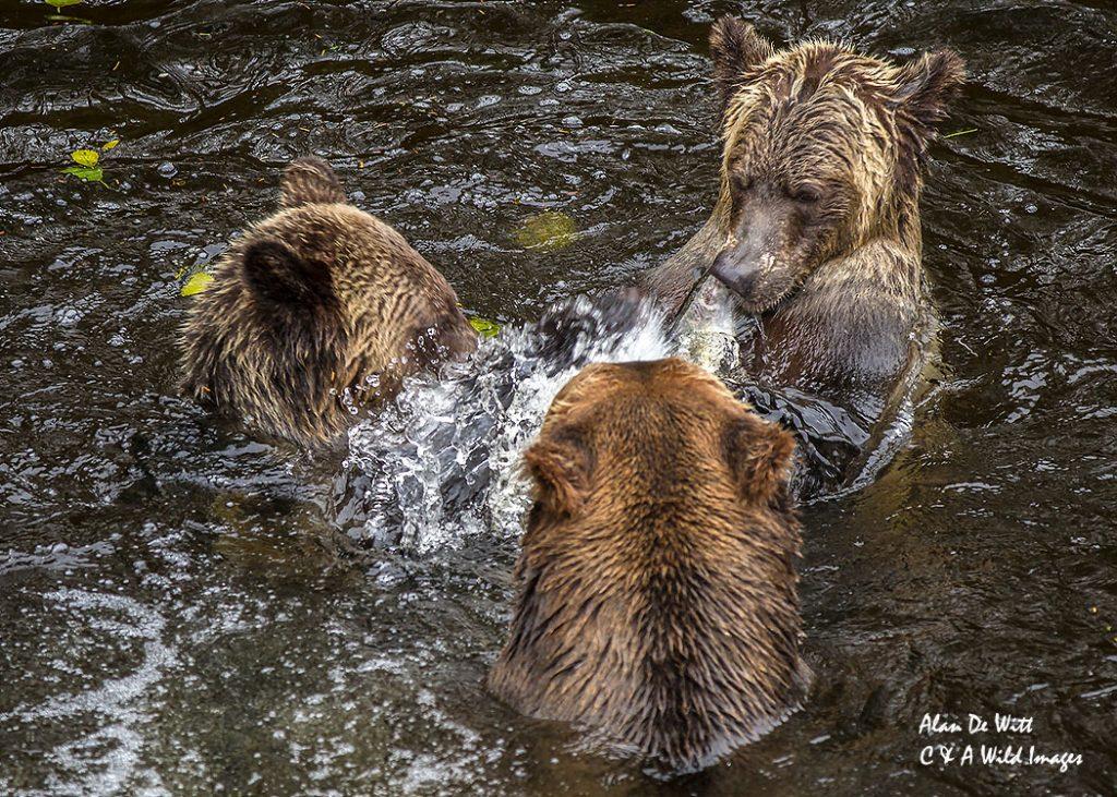 The-3-bears