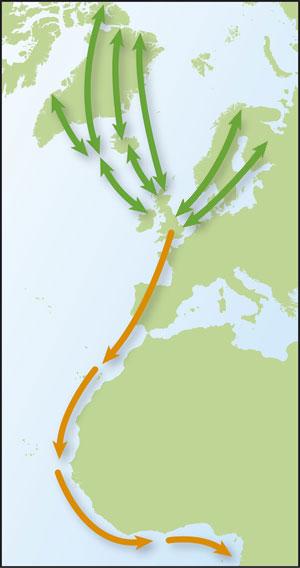 East Atlantic flyway