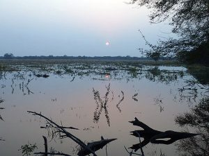 View across the Bharatpur wetlands