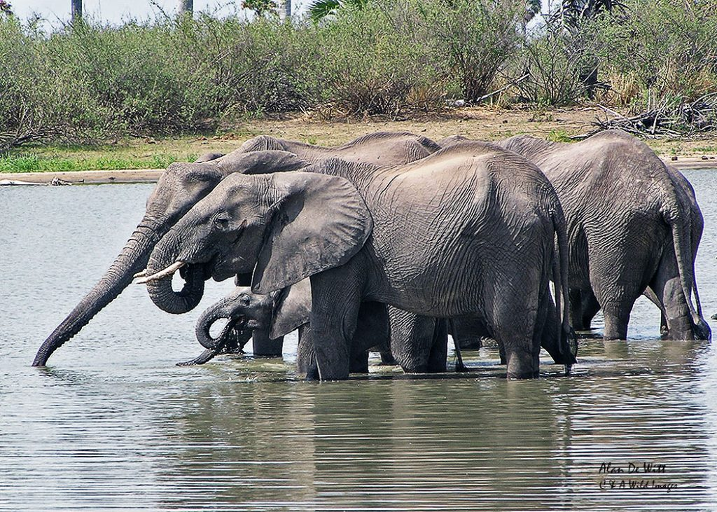 Elephants gathering in one of the ox bow lakes