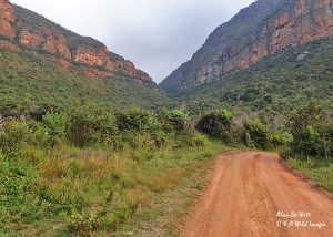 View looking back up the Entabeni gorge