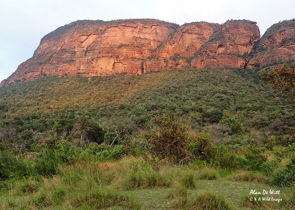 Entabeni's 600 m High Escarpment