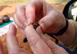 Removing the head of the Mopane worm