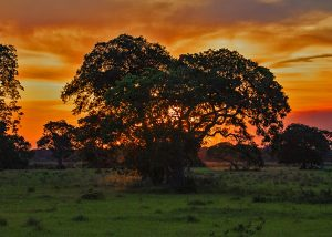 Sunset and Sundowners