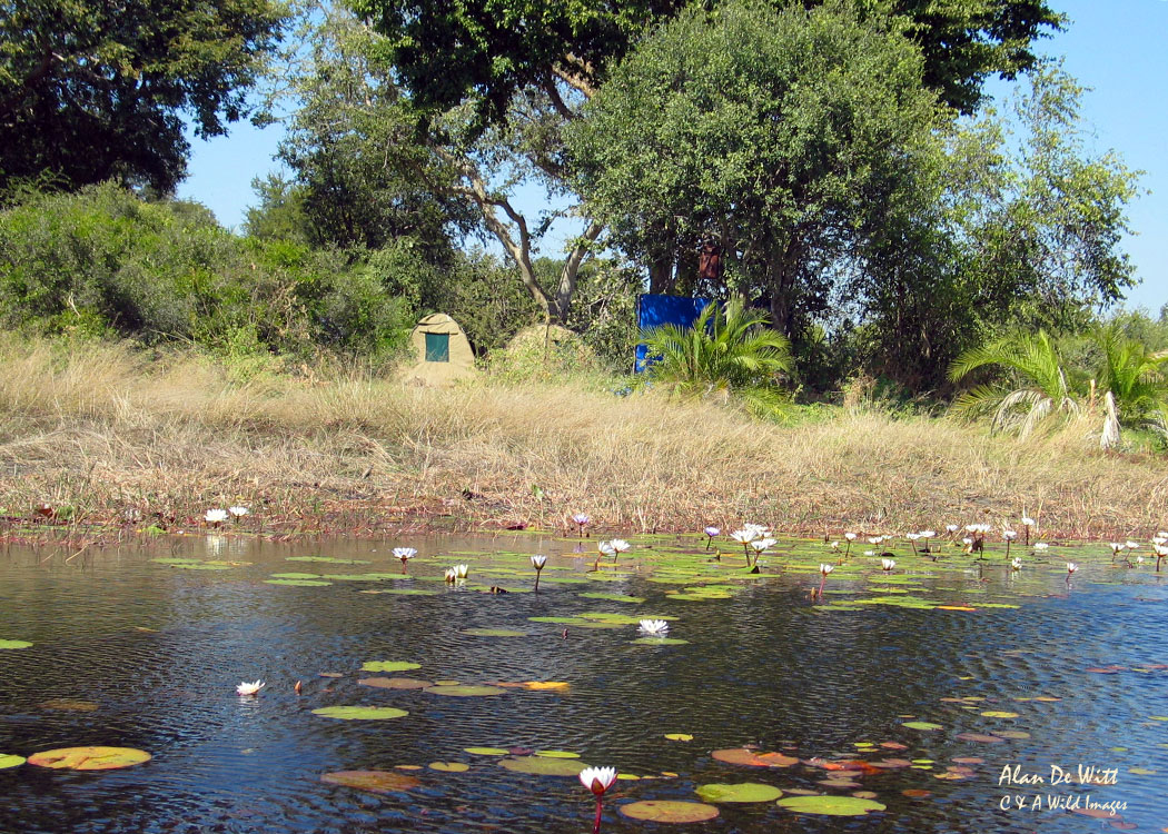 Camp site in the Okavango Delta