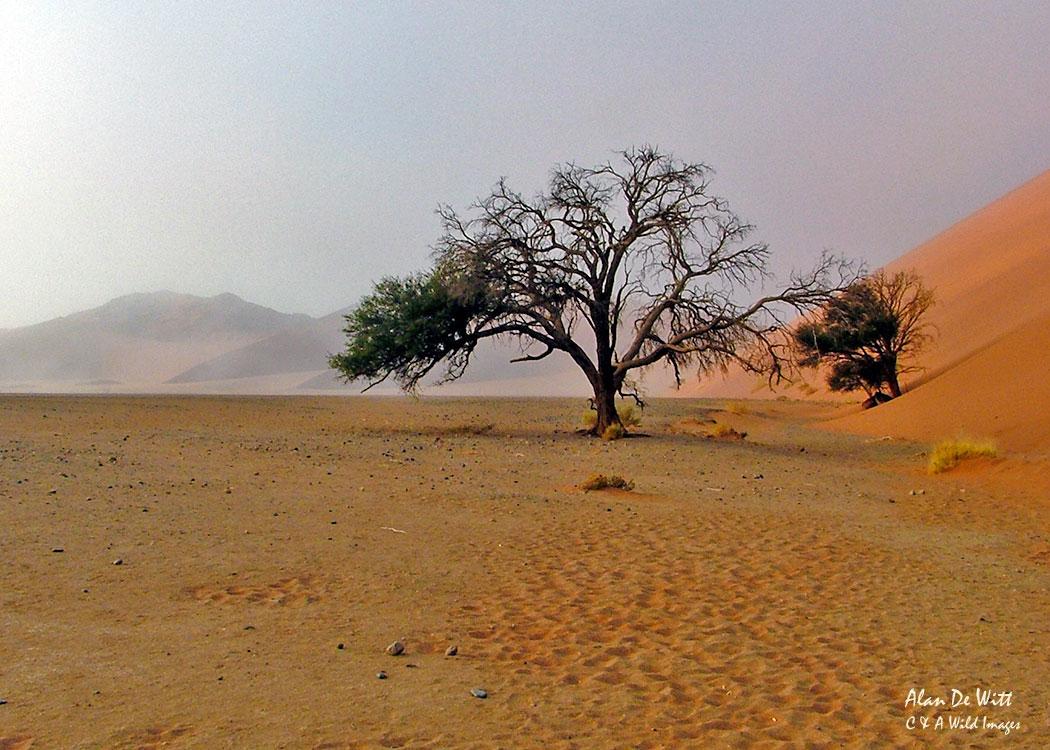 Sand Dunnes at Sossusvlei