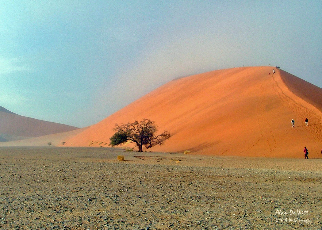 'Big Daddy' Sand Dunnes at Sossusvlei