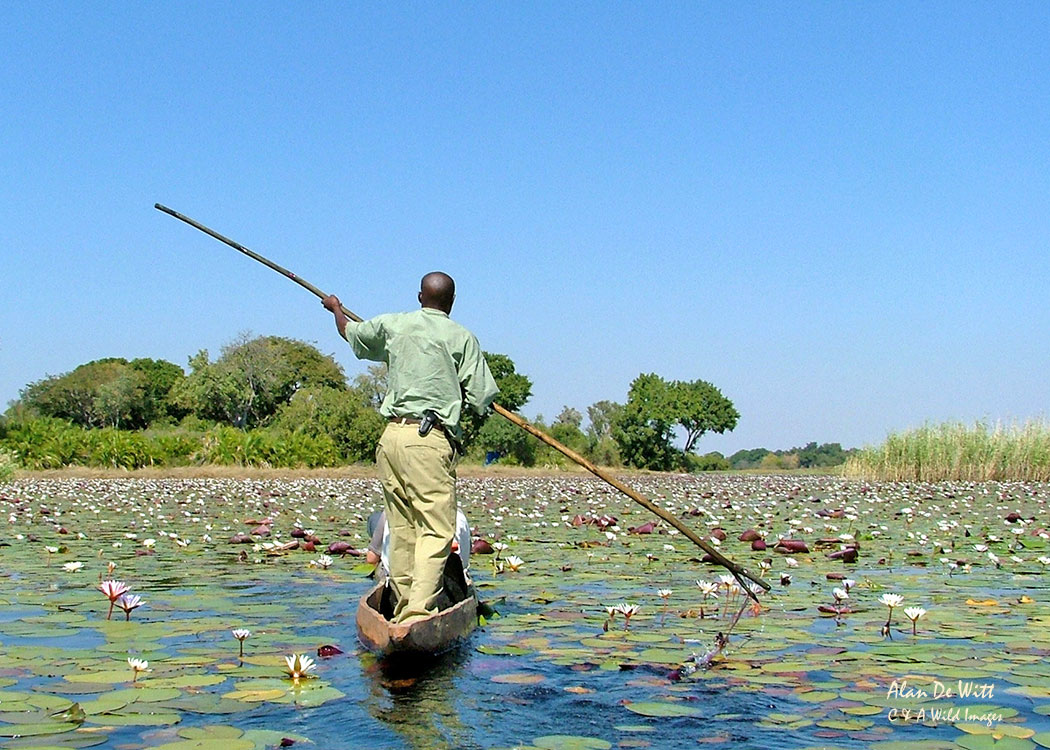 Mekoru in the Okavango Delta