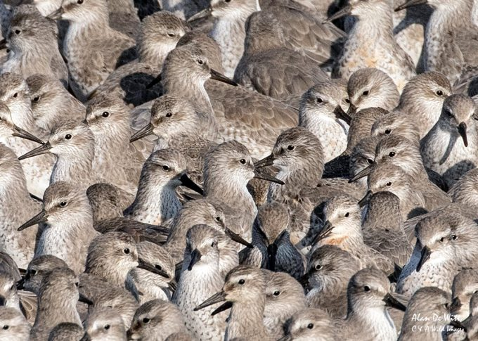 Close up of group of Knot