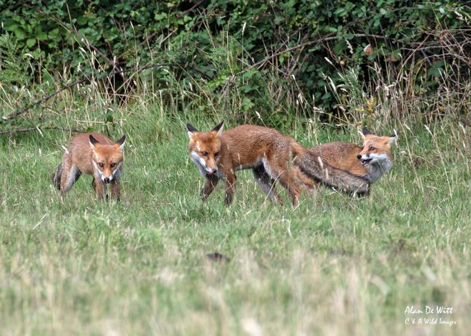 Three Cubs outside our local earth